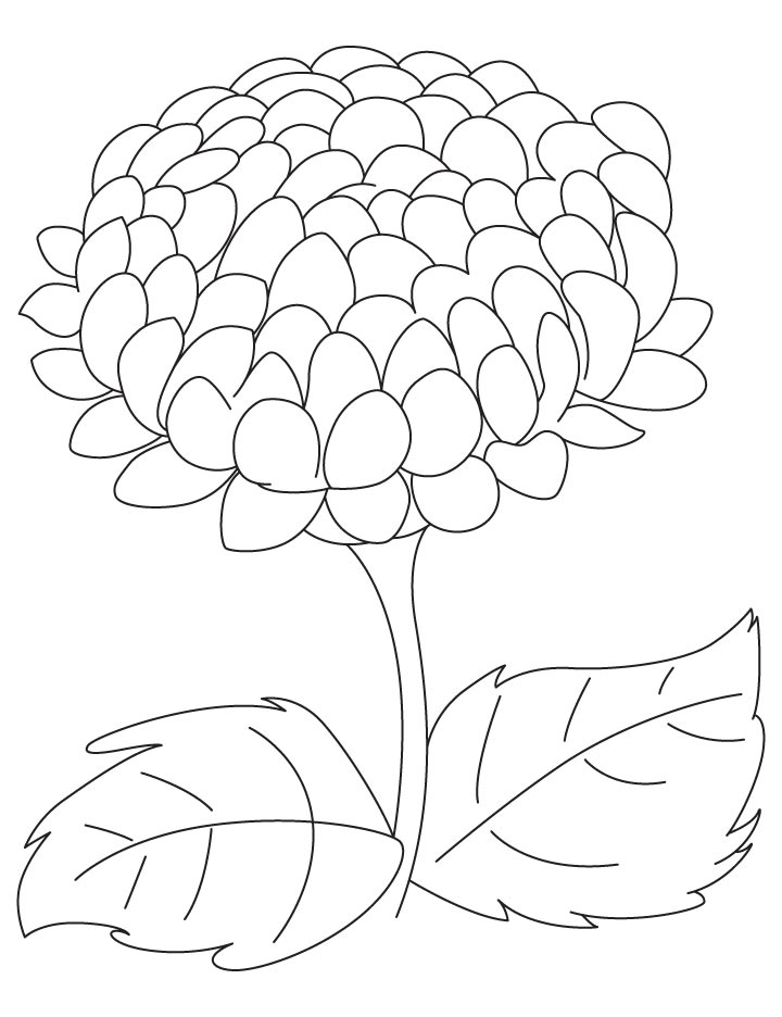 big chrysanthemum coloring page - Chrysanthemum Book Coloring Pages
