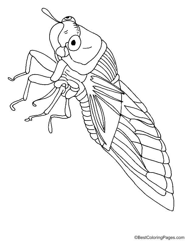 Big eye Cicada coloring page   Download Free Big eye ...