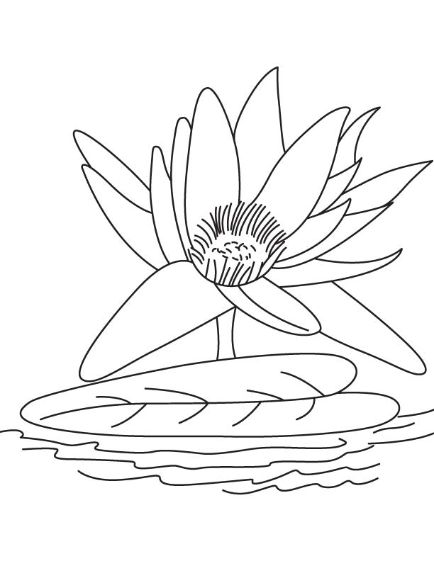 Big Water Lily Flower Coloring Page