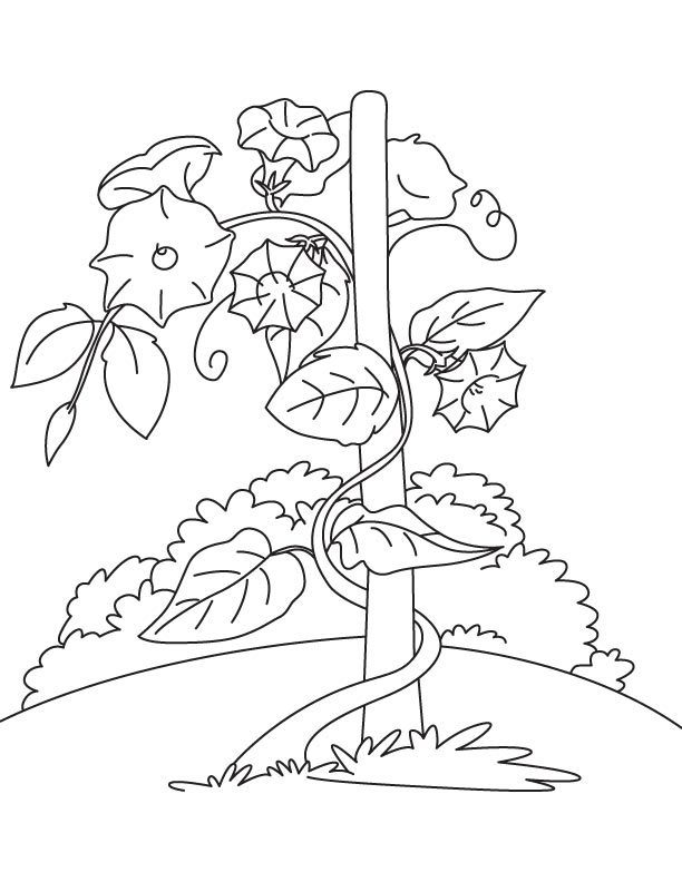 Bindweed vine coloring page Download