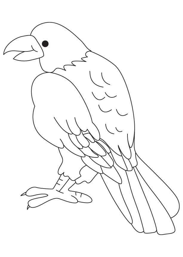 Bird of prey coloring page Download