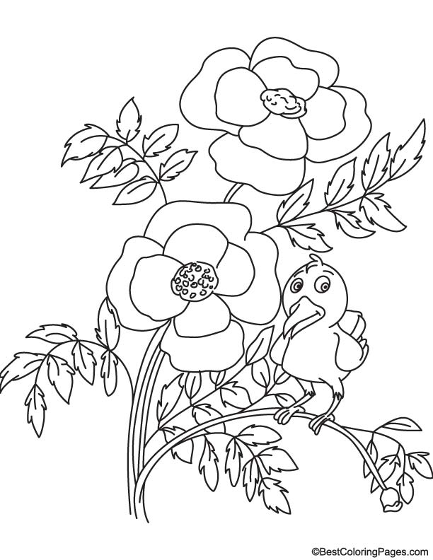 Bird on poppy plant coloring page