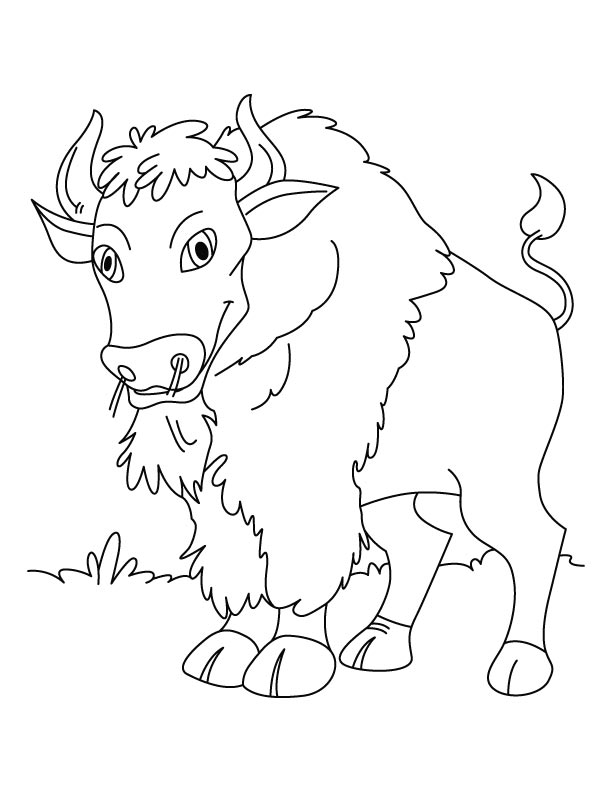 Calm n quiet Bison coloring pages