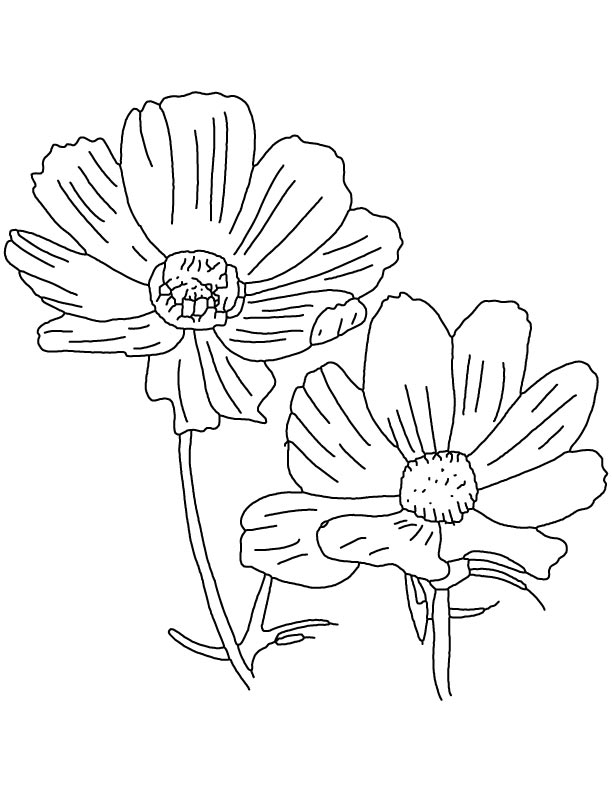 Byu cosmo coloring page coloring coloring pages for Byu coloring pages