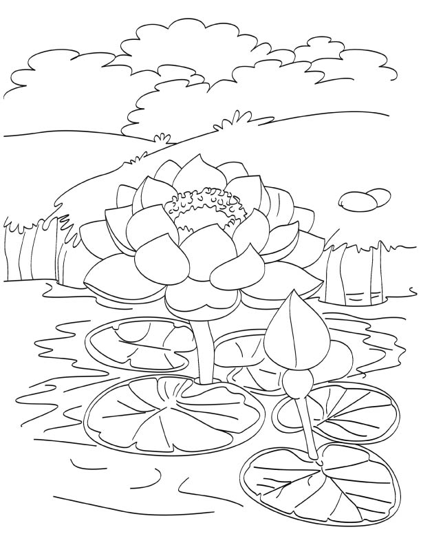 Blooming Lotus In Pond Coloring Page