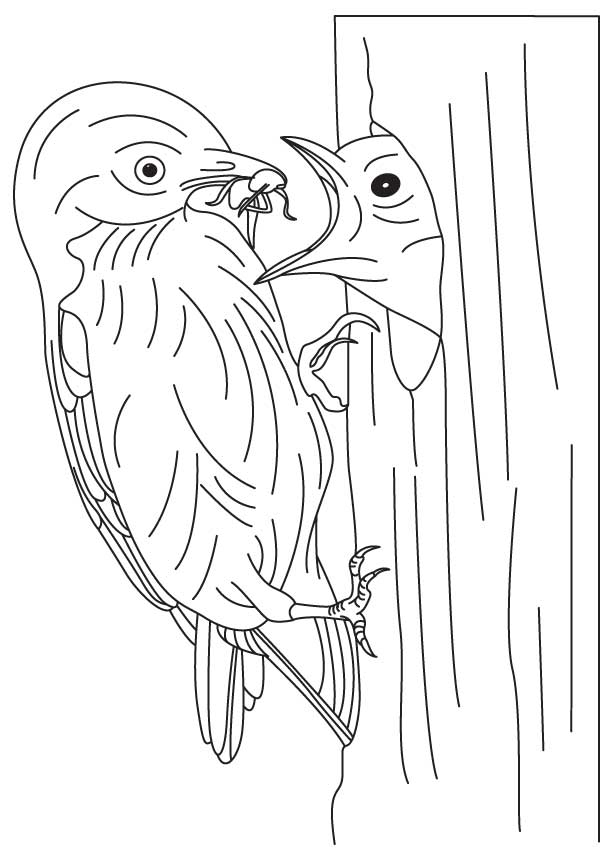 Bluebird Feeding Its Baby Coloring Page Download Free