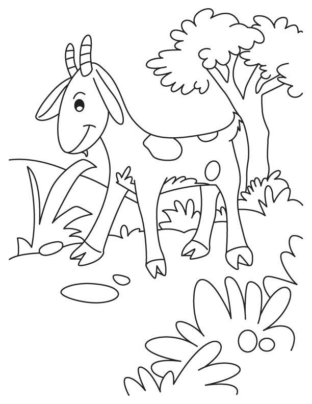 Blushing goat coloring page
