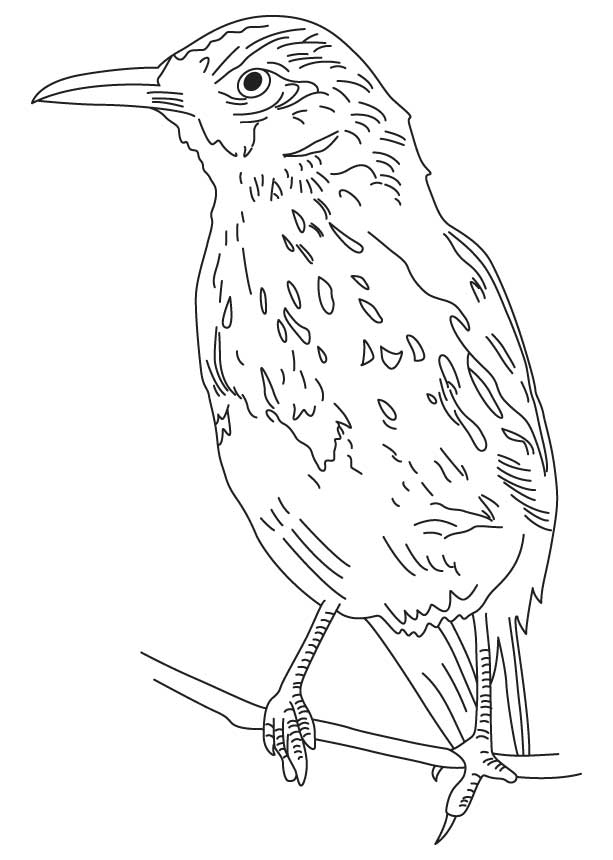 Bold brown thrasher coloring page
