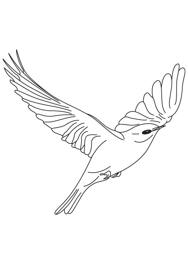 bright bluebird flying coloring page Download Free bright