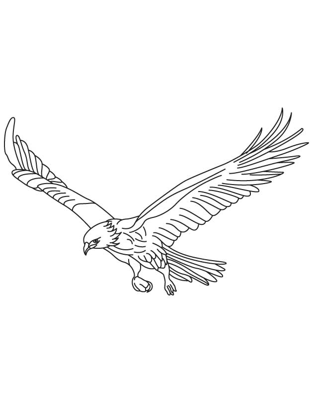 Broad wings bird in flight coloring page Download Free Broad