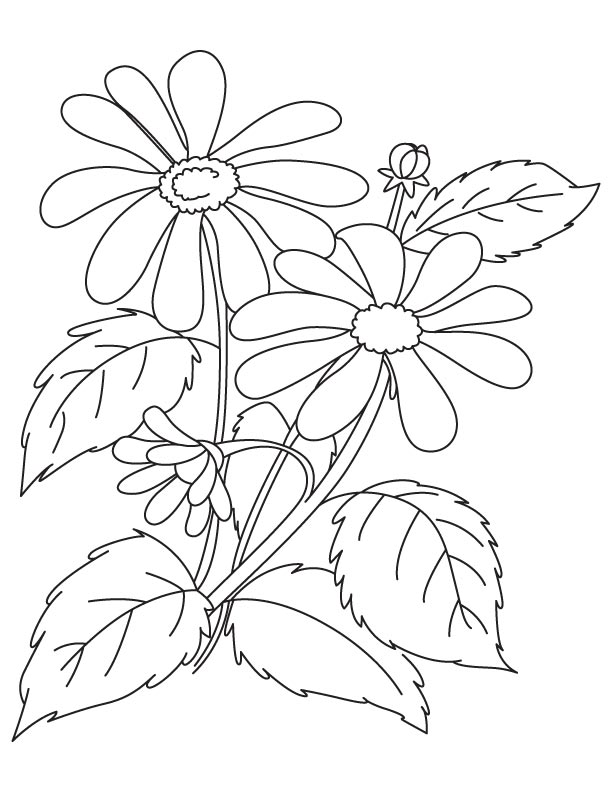 coloring pages columbine - photo#18