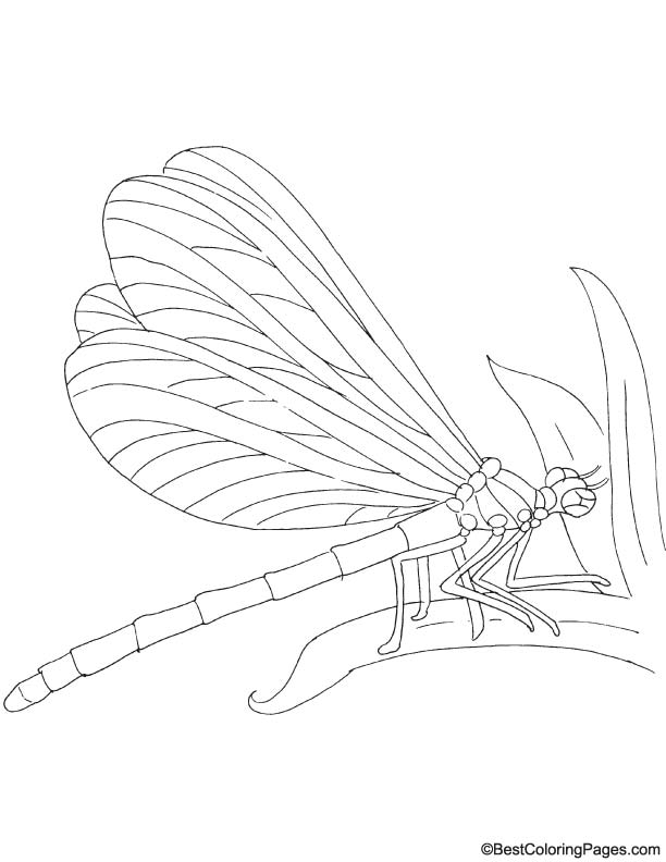 Brown hawker coloring page