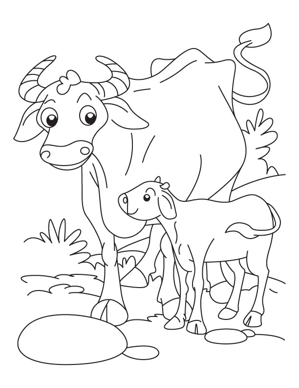 Buffalo With A Calf Coloring Pages