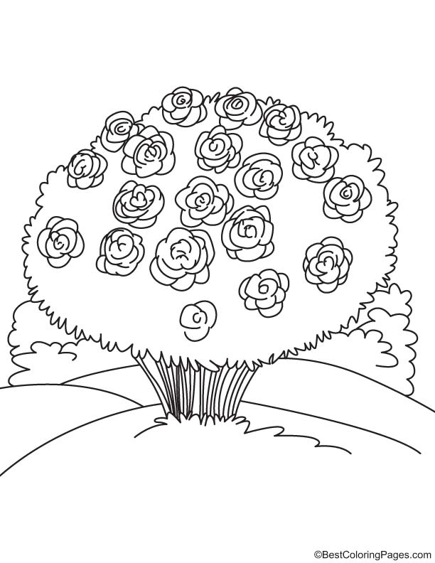 bunch of peony coloring page download free bunch of peony coloring