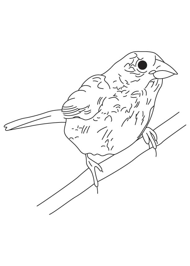 Bunting bird coloring sheet