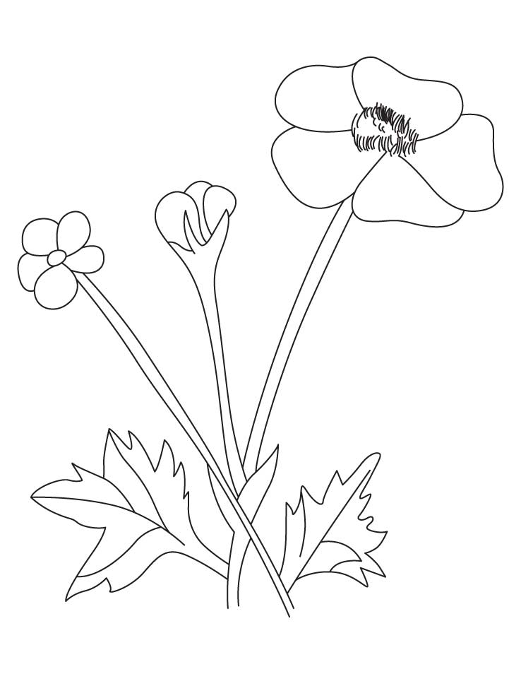 Buttercup flower coloring pages 2 for Buttercup flower coloring pages