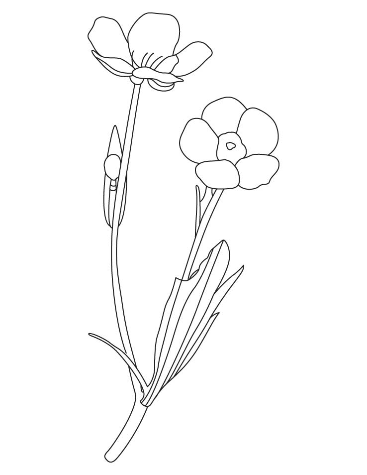 Yellow Spring Flower Coloring Pages Buttercup Coloring Pages