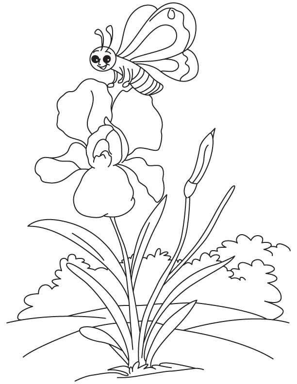 iris coloring pages - photo#12