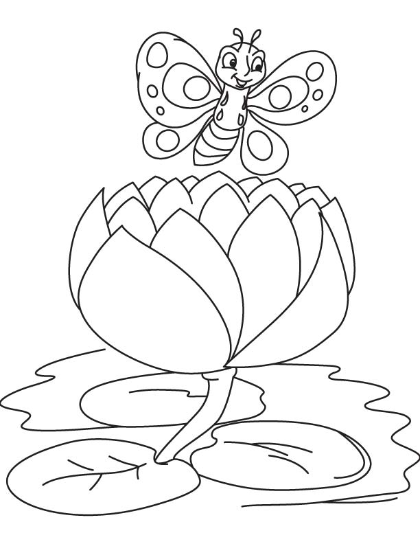 butterfly on a big water lily coloring page - Lily Coloring Pages