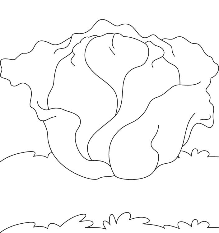Cabbage Coloring Download Free Cabbage Coloring For Kids Best Lettuce Coloring Page