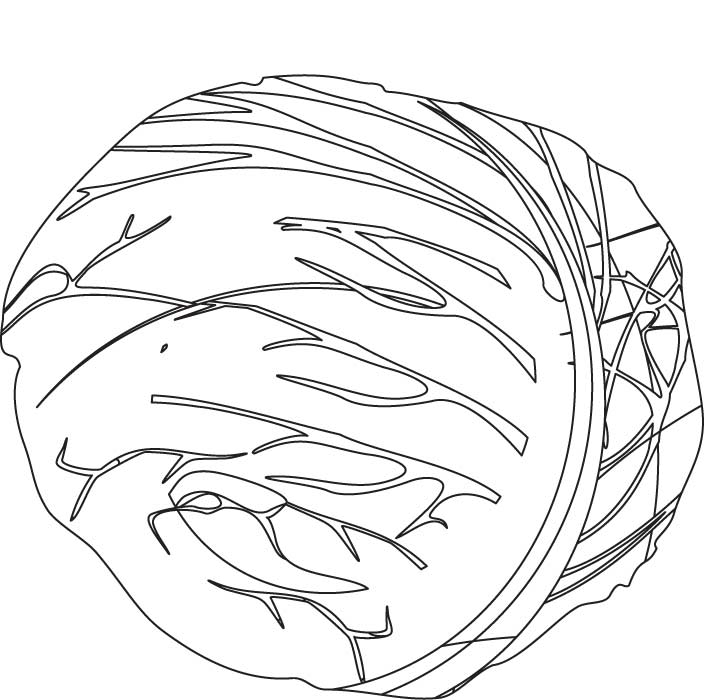 Red Cabbage Coloring Pages