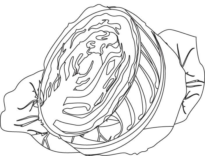 Half Cabbage Coloring Page Download Free Half Cabbage