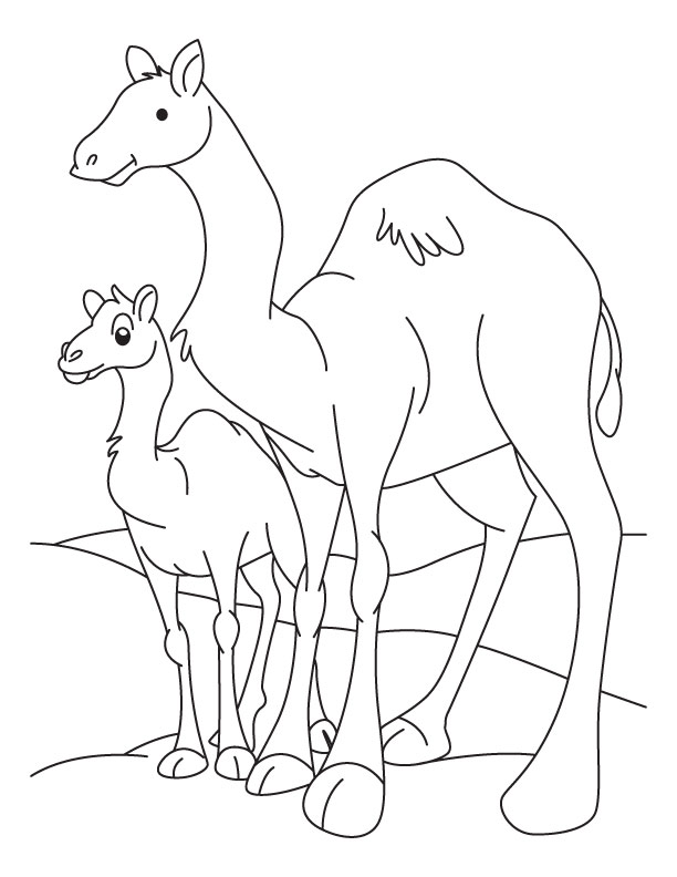 Camel and Baby Camel coloring page Download Free Camel and Baby