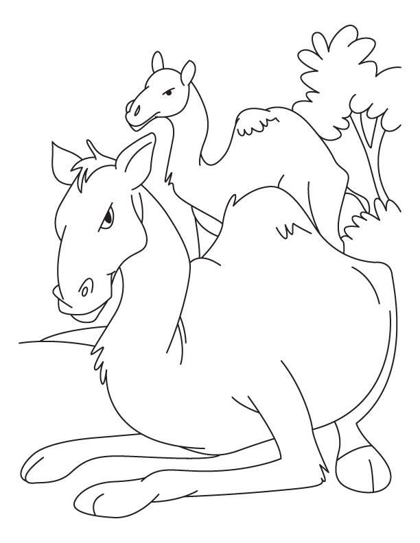 Baby camel with mother camel coloring pages