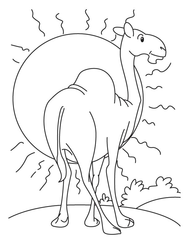 Camel standing before the sun coloring page