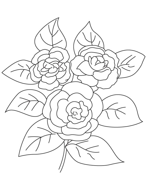 Camellia picture coloring page