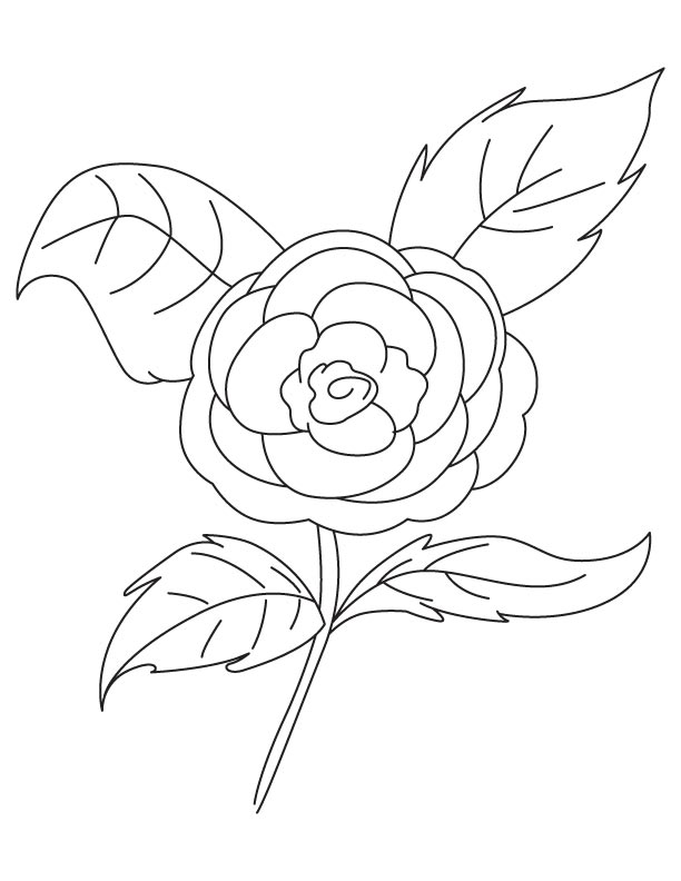 Camellia Rose Coloring Page