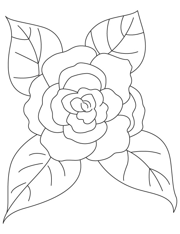 Camellia with four leaves coloring page