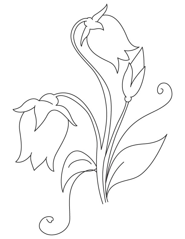 Campanula Flowers Coloring Page Download Free Campanula