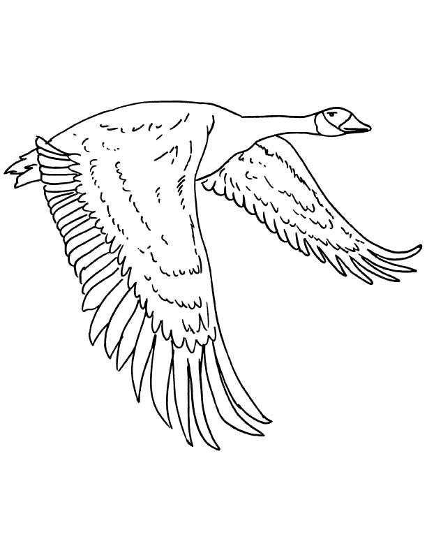 coloring picture of canadian geese coloring pages