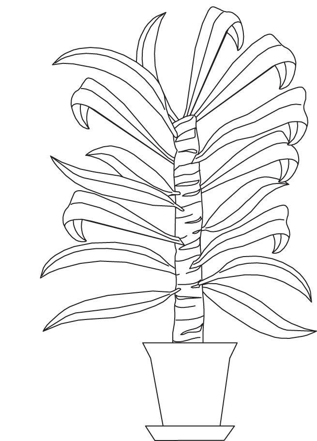 Cane Plant Coloring Page Download Free Cane Plant