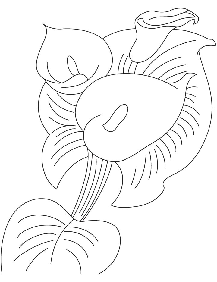 Canna bulb coloring page