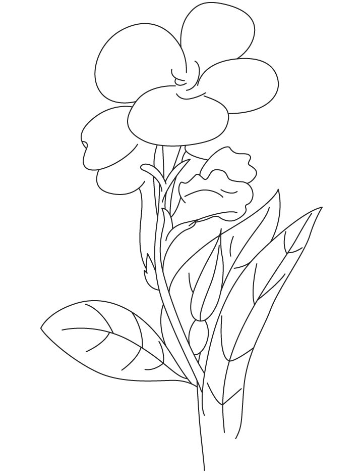 Canna lilly coloring page