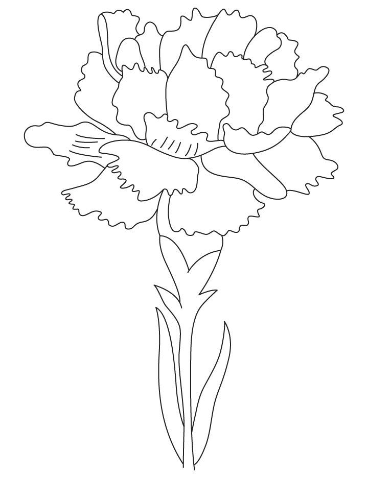 carnation coloring pages - photo#4