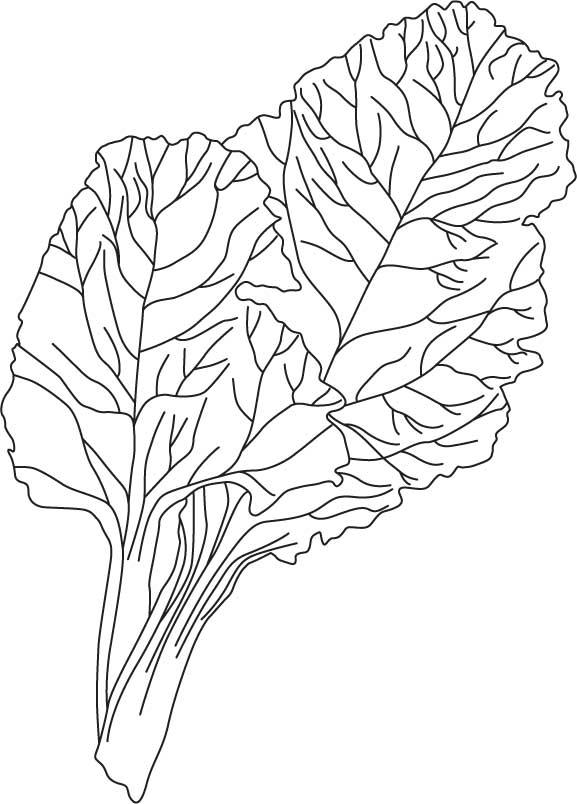 Chard coloring sheet