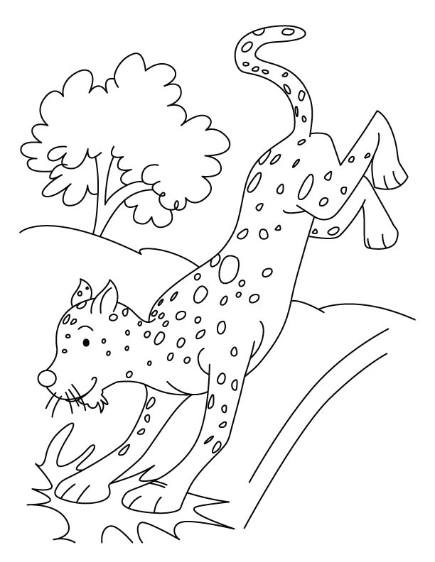 Hunting cheetah coloring pages Download Free Hunting cheetah