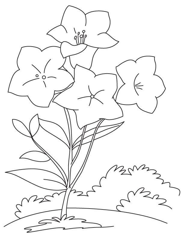 naaman coloring pages - photo #43