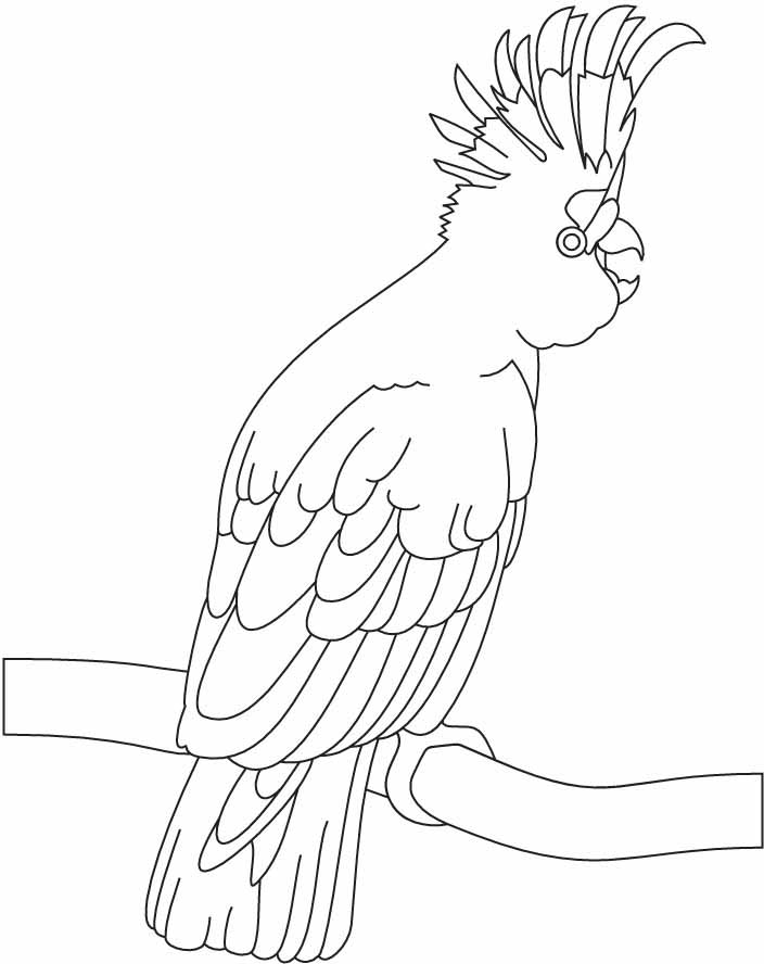 Cockatoo Line Drawing a Beautiful Cockatoo Coloring