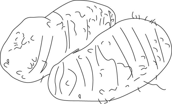 Colocasia coloring sheet