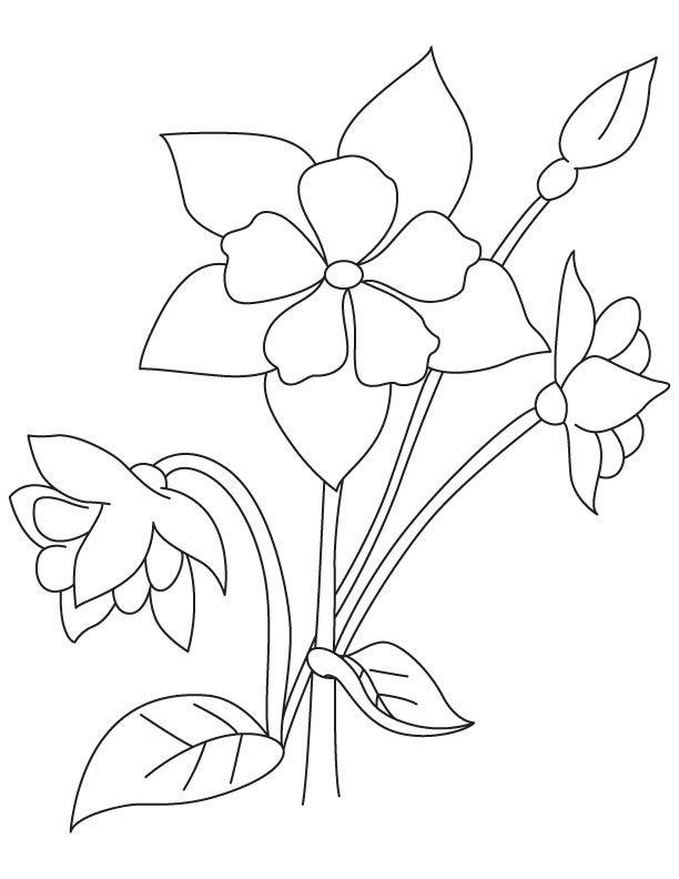 Columbine Perennial Coloring Page Download Free Columbine Perennial Coloring Page For Kids Best Coloring Pages