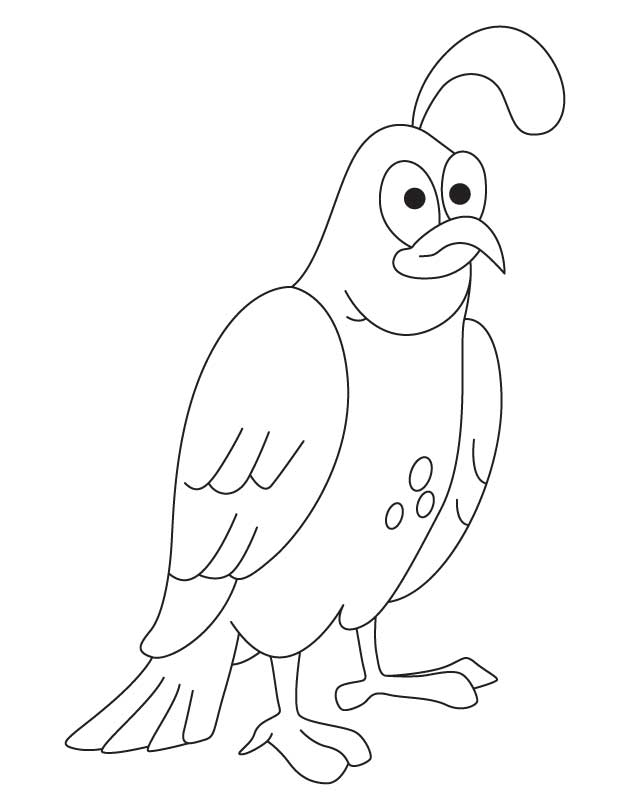 Common Quail Coloring Page