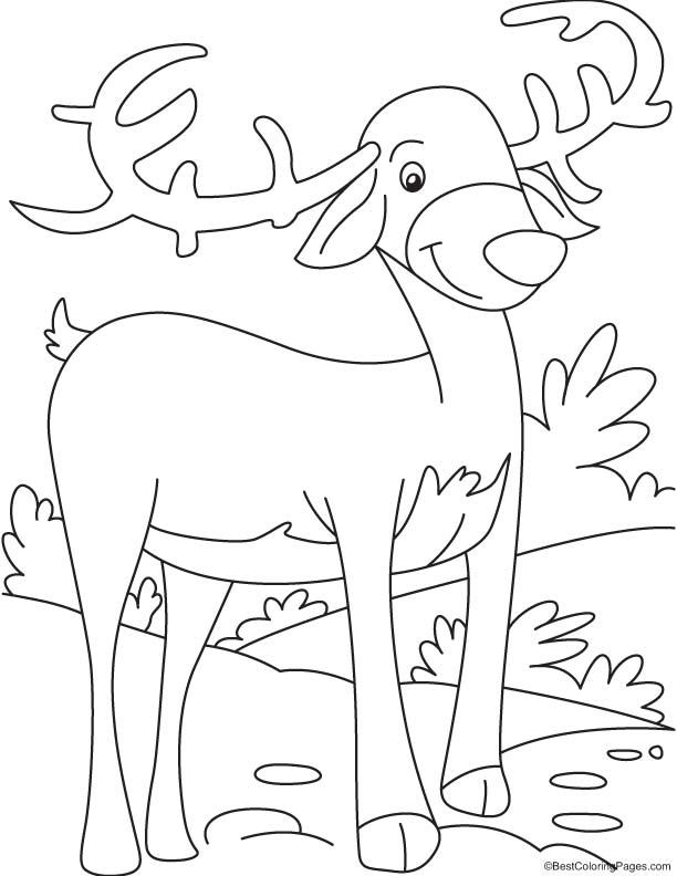 Consider reindeer coloring page