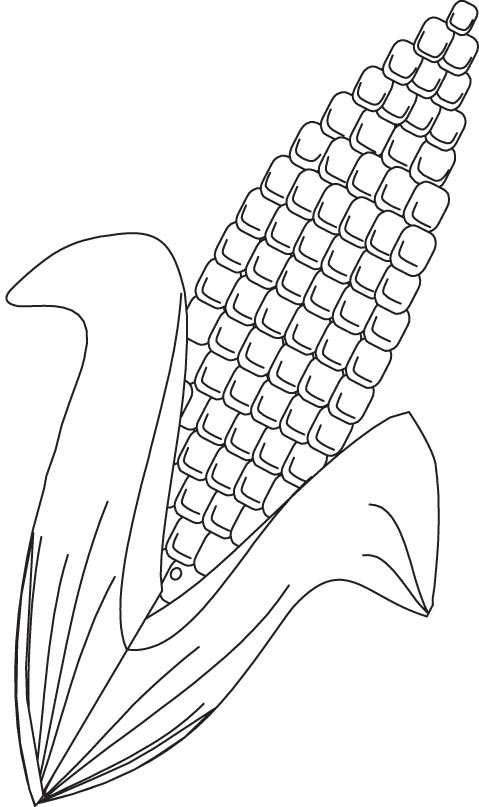 Corn coloring page Download Free Corn coloring page for kids