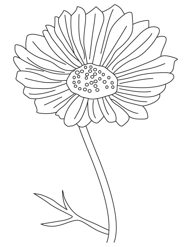 Cosmos ornamental flower coloring page