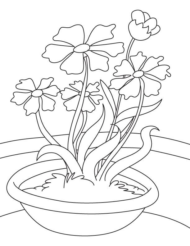Cosmos plant coloring page