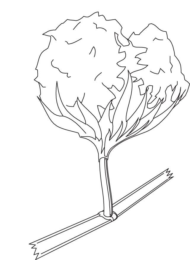 Cotton Coloring Page Download Free Cotton Coloring Page Cotton Coloring Page